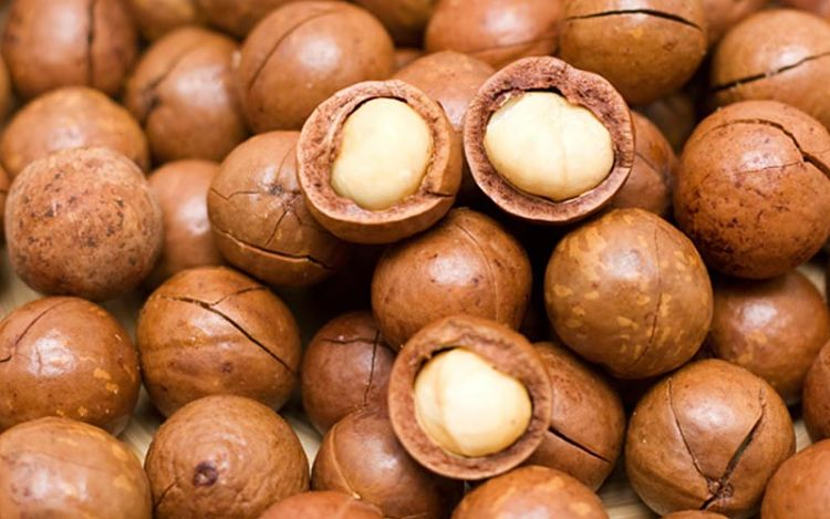 Macadamia nuts from Australia are magnificent with fabulous nutrients and more protein and less fat than other types of nuts