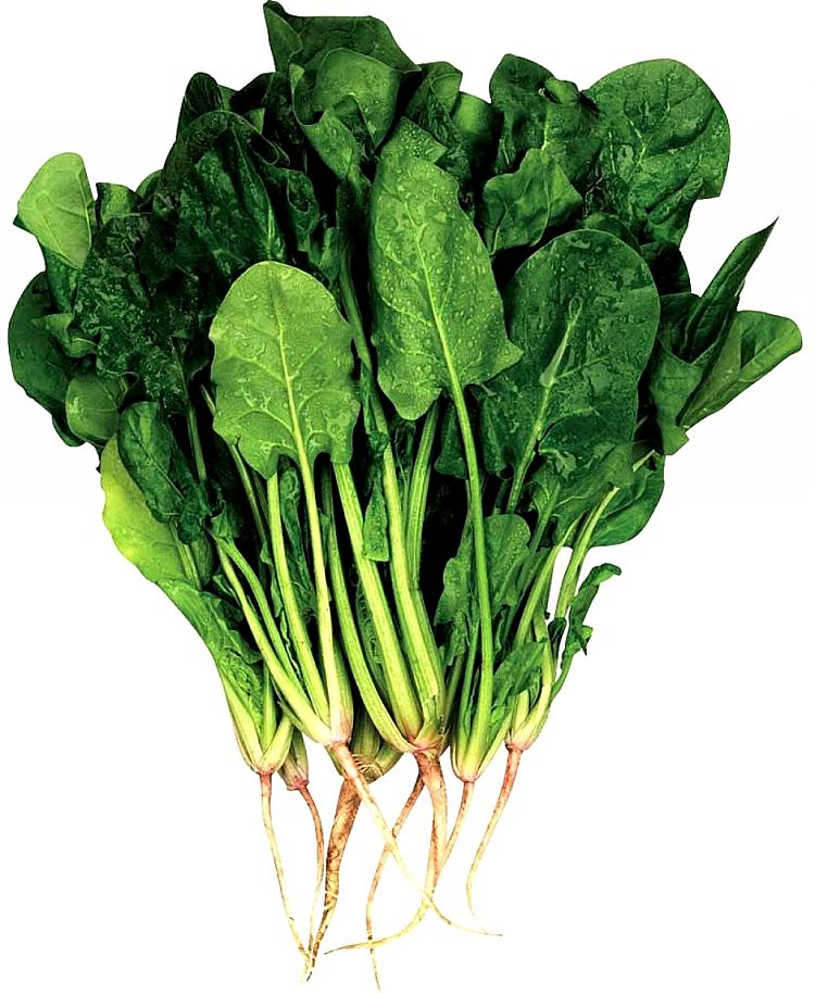 Spinach has an outstanding array of nutrients as shown in its Nutrition data and provides many health benefits. The culinary uses are diverse and varied