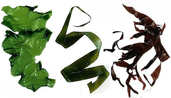 Seaweed is increasingly being used more widely because of its outstanding nutrition facts and health benefits