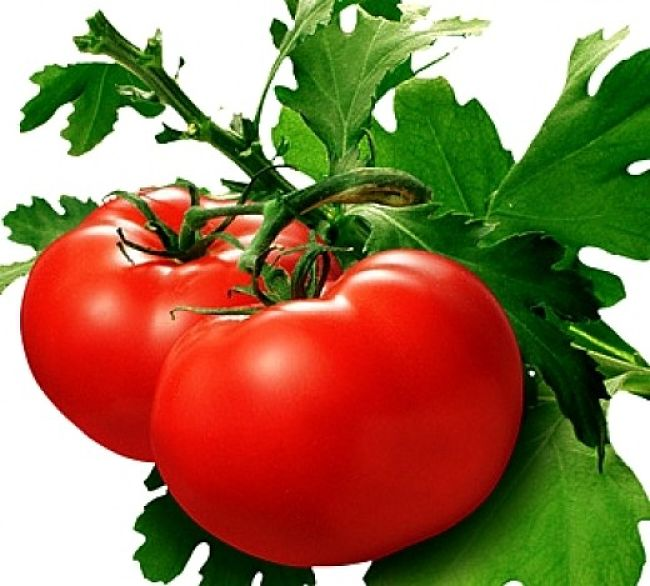 Tomatoes are easily grown and widely available. While used as a vegetable they are actually fruits and are more nutritious than apples of oranges
