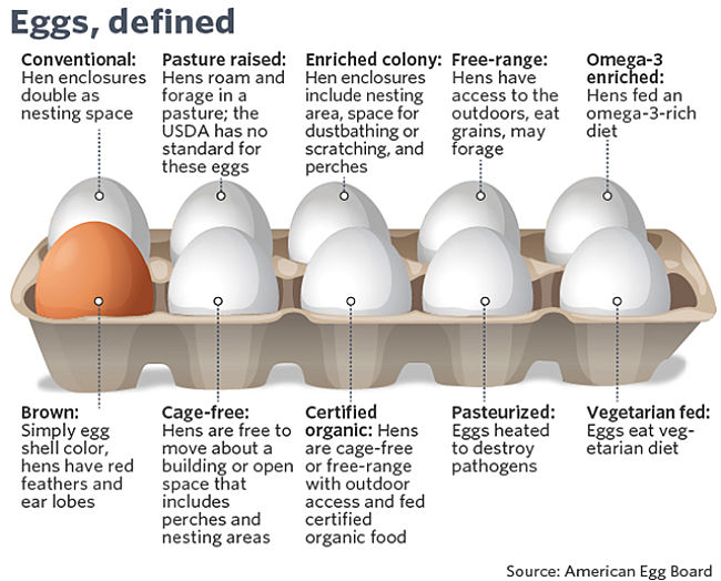 Definitions of various types of eggs