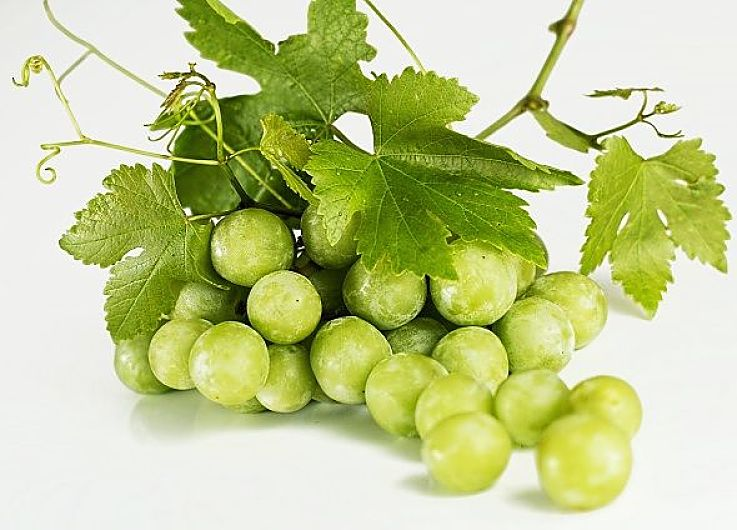 Bunch of white wine grapes - How dies the soil, climate and care offered by the grape grower affect the tastes of wine?