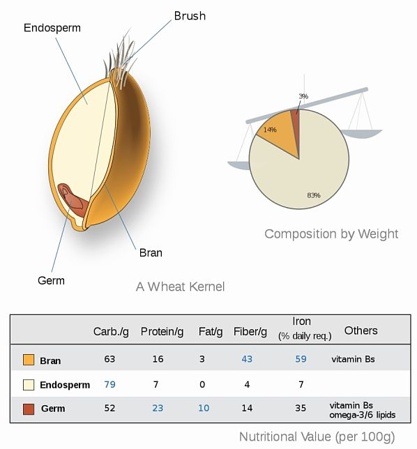 Most of the healthy nutrients in wheat are in the bran and germ which are removed when grain is processed